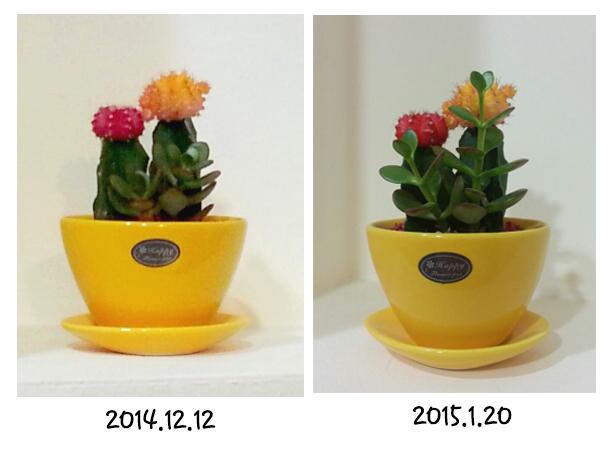 2015-02-04 [선인장의 성장].jpg