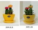 [2015년] 선인장의 성장 썸네일 사진