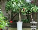 정원의 포도나무 썸네일 사진