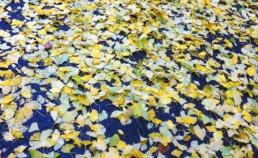 2012년11월11일 은행잎 썸네일 사진