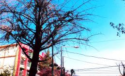 2017년 11월 26일 남산쪽 하늘 썸네일 사진