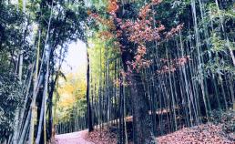 2017년 12월 3일 처음 가 본 담양대나무 밭 썸네일 사진