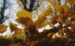 2016년 11월 23일 가을 풍경 썸네일 사진