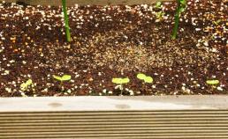 새로 온 식물들 썸네일 사진