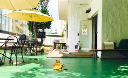 명동의 고양이 썸네일 사진